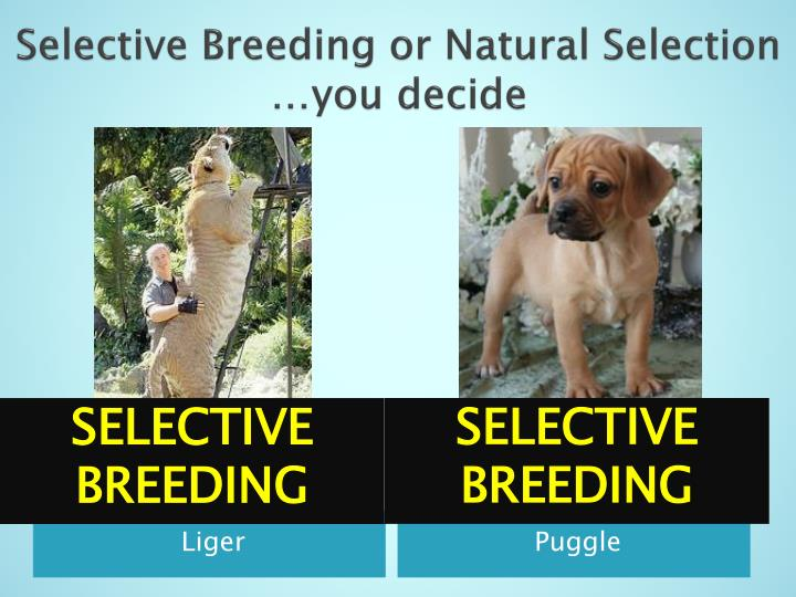 Animals For Natural Selection