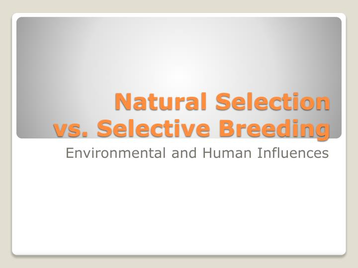 understanding natural selection in humans and animals Making useful races of animals and plants but how selection could be theory of natural selection from 1838 through the next four decades.