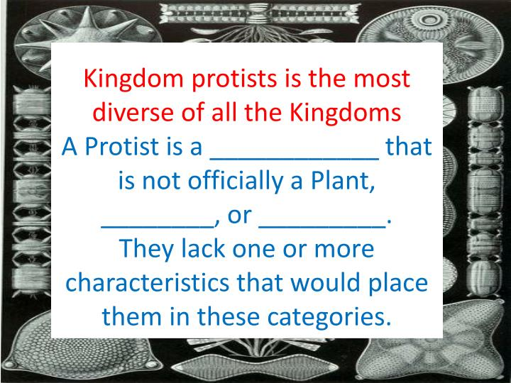 Kingdom protists is the most diverse of all the Kingdoms