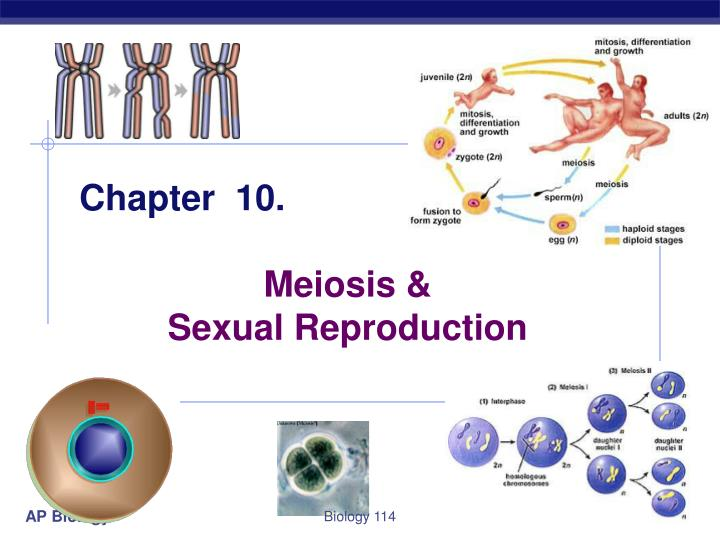 ap biology mitosis and meiosis essay questions
