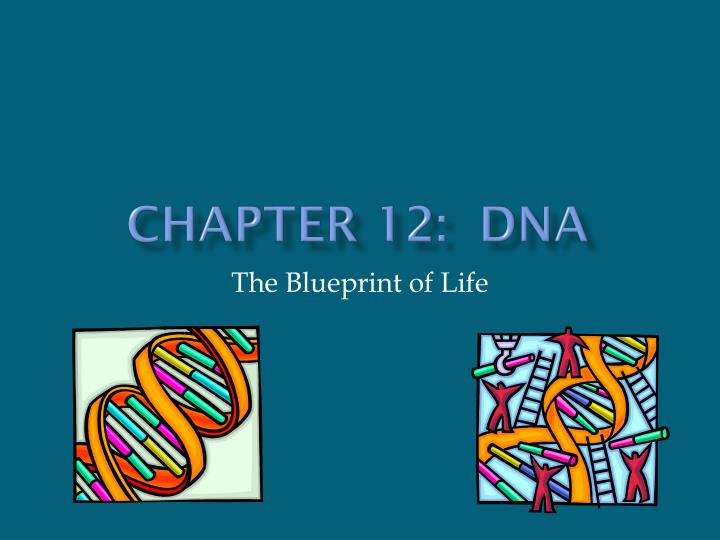 Ppt chapter 12 dna powerpoint presentation id2591888 chapter 12 dna the blueprint of life malvernweather Images