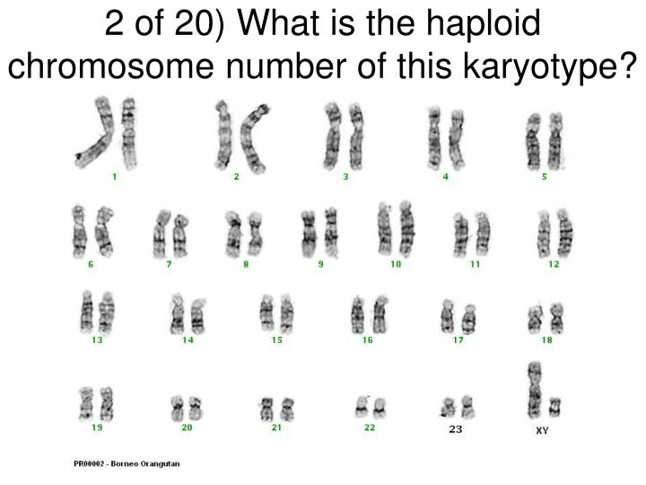 2 of 20 what is the haploid chromosome number of this karyotype
