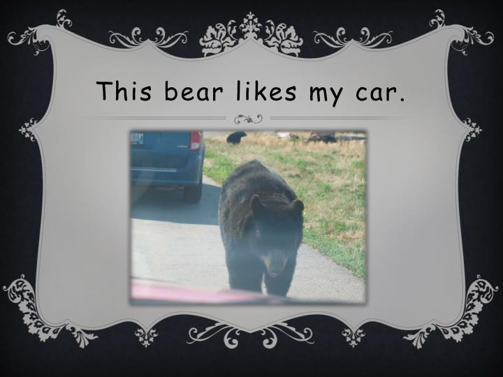 This bear likes my car.