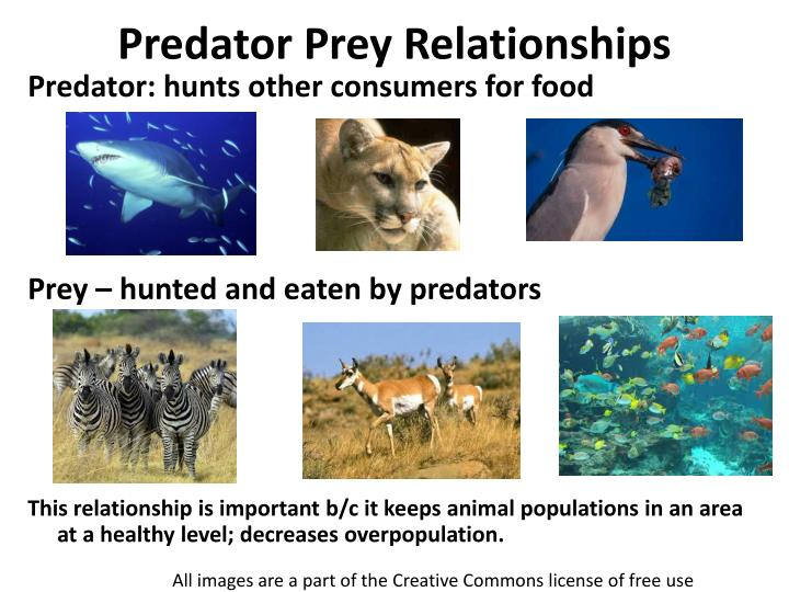 predator prey relationships n.