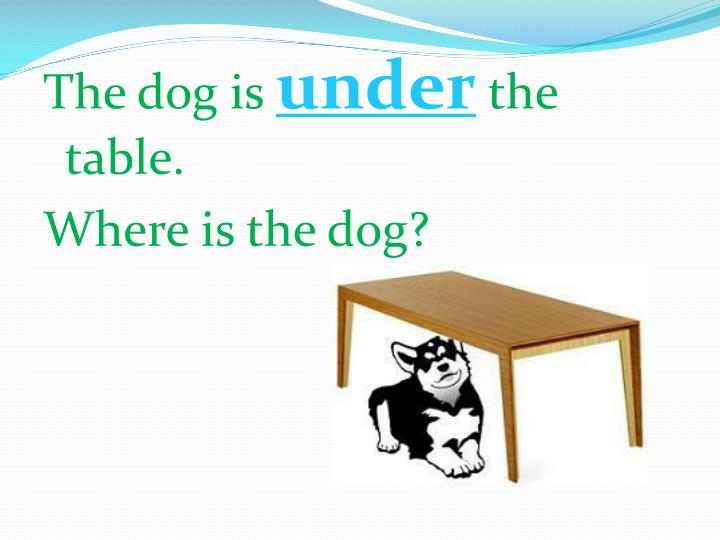 The dog is