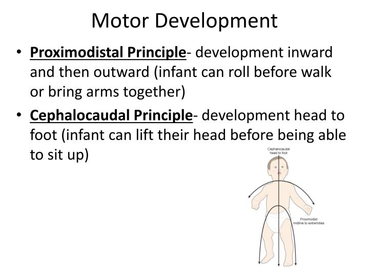 proximodistal principle of development