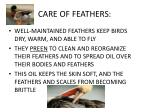 care of feathers