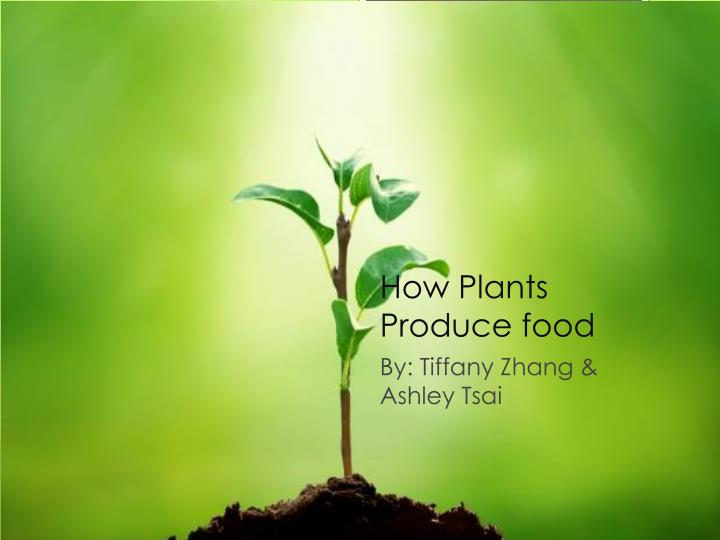 how plants produce food n.