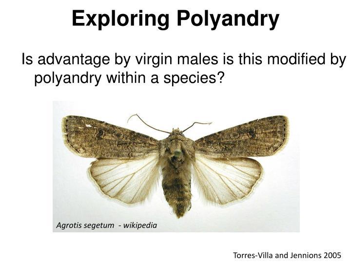 Exploring Polyandry