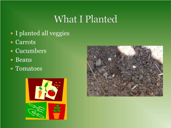 What i planted