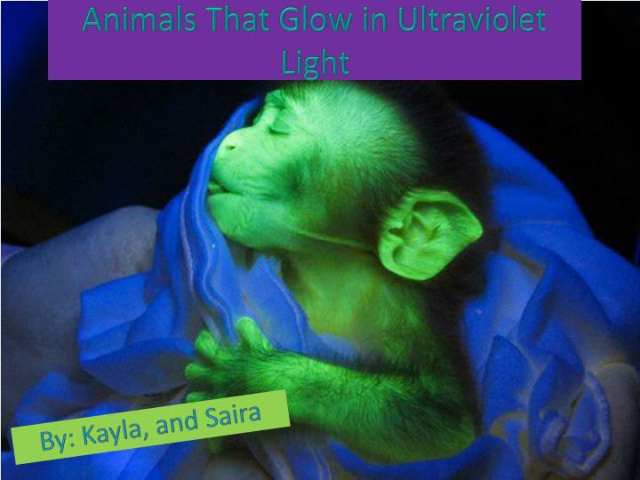 animals that glow in ultraviolet light n.