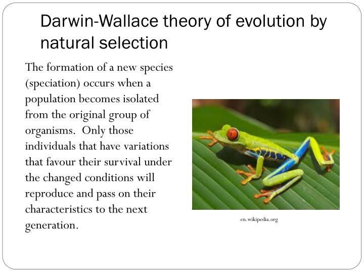 evolution of australian biota essay Essays in natural history and evolution: the essay in science is series of biology textbooks emphasizing evolution in australia collected papers of r a.