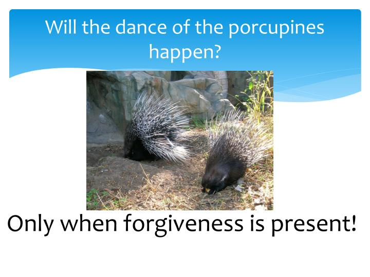 Will the dance of the porcupines happen?