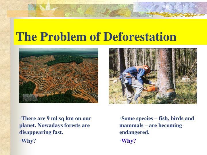 The Problem of Deforestation