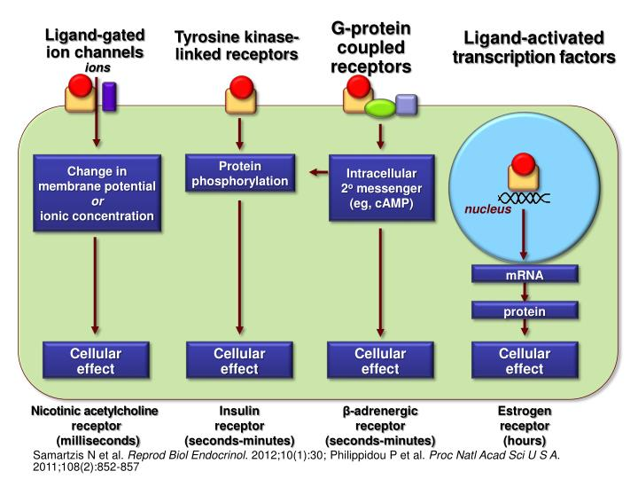 G-protein  coupled