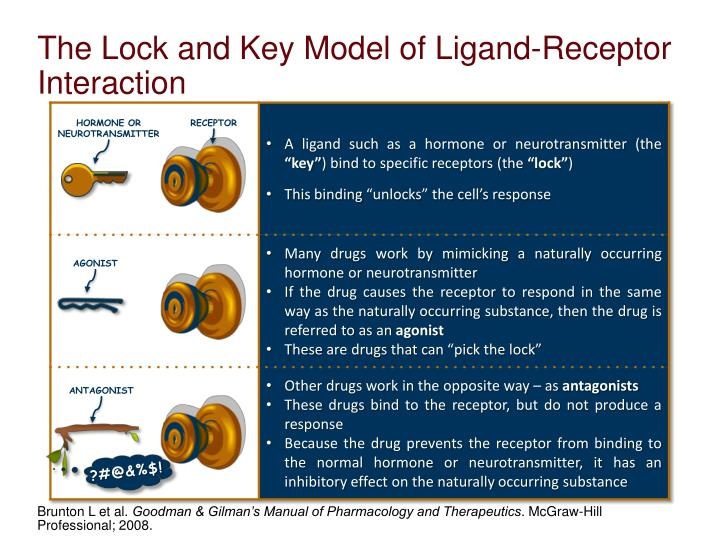 The Lock and Key Model of