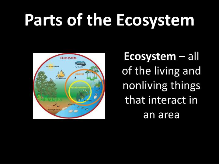 Parts of the ecosystem1