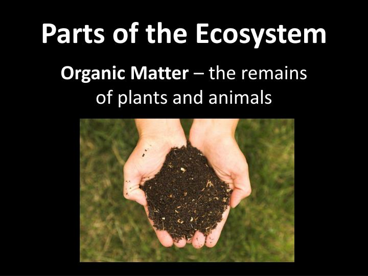 Parts of the ecosystem2