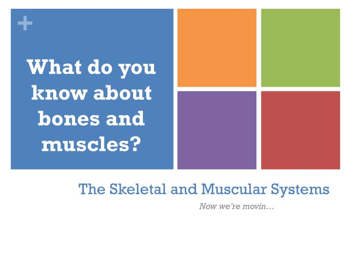 the skeletal and muscular systems n.