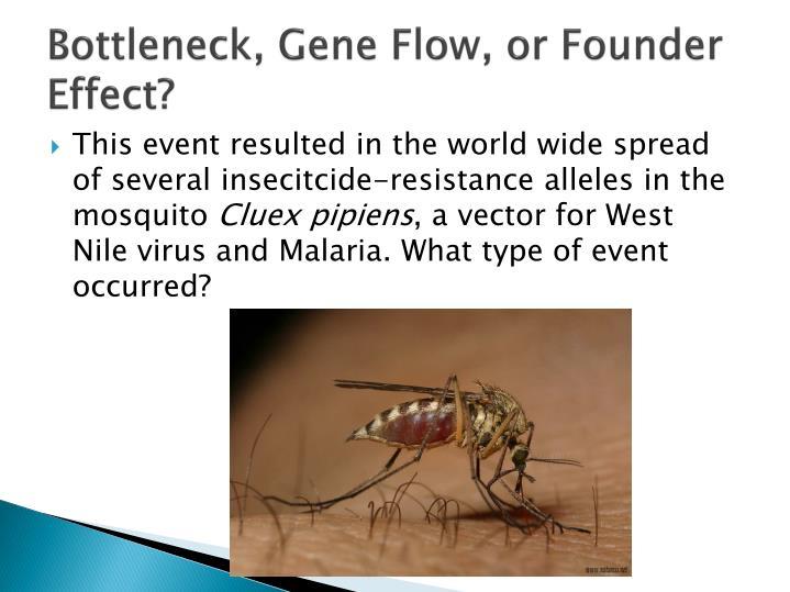 Bottleneck, Gene Flow, or Founder Effect?