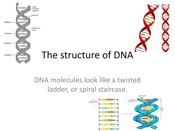 an in depth synopsis of the dna deoxyribonucleic acid