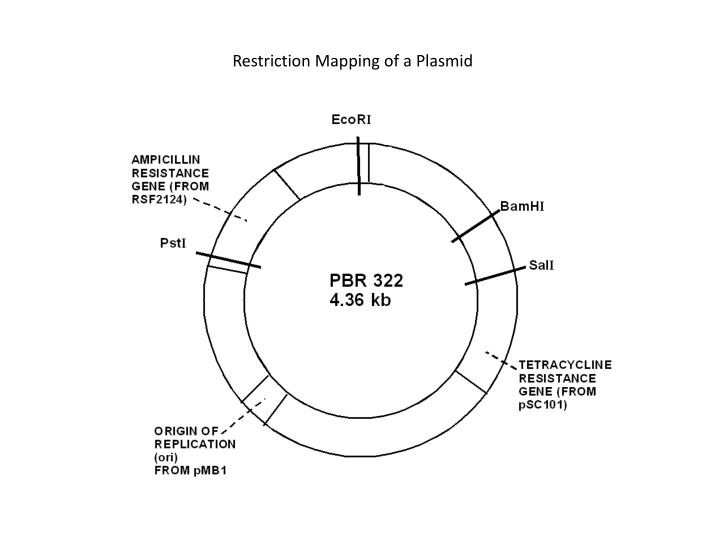 how to draw a plasmid in powerpoint