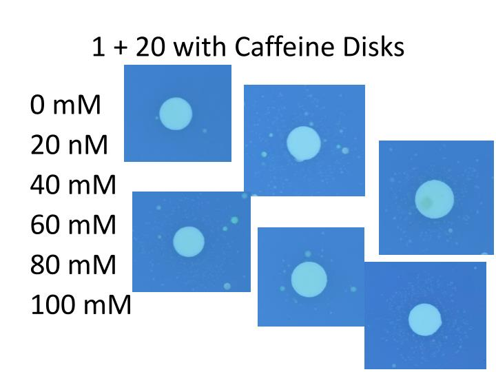 1 + 20 with Caffeine Disks