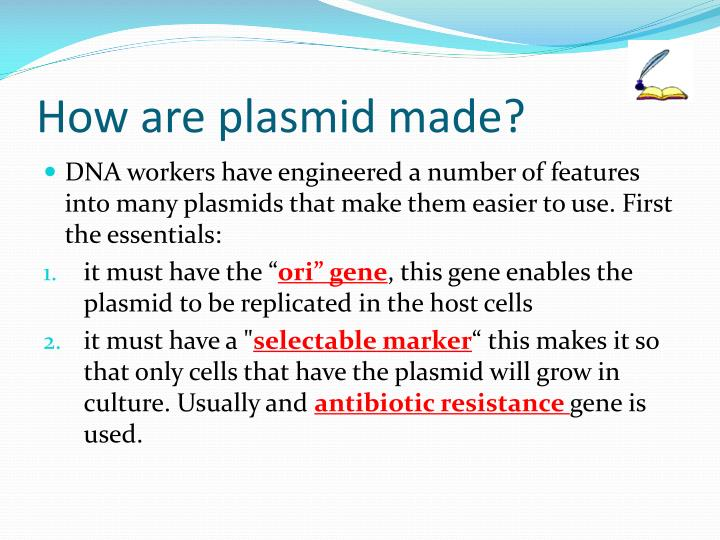 How are plasmid made?