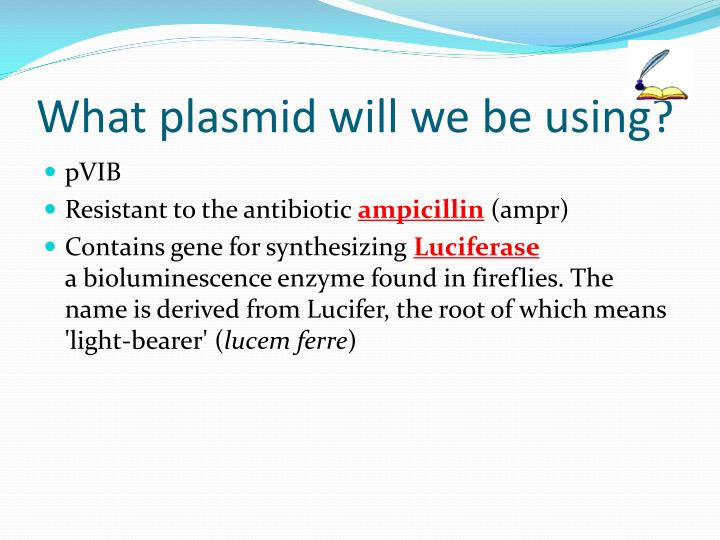 What plasmid will we be using?