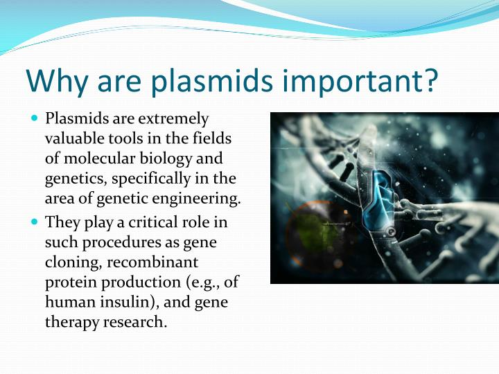 Why are plasmids important?