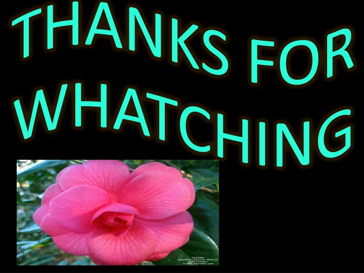 THANKS FOR WHATCHING
