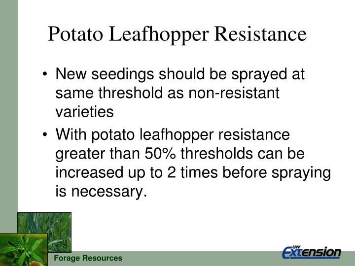 Potato Leafhopper Resistance
