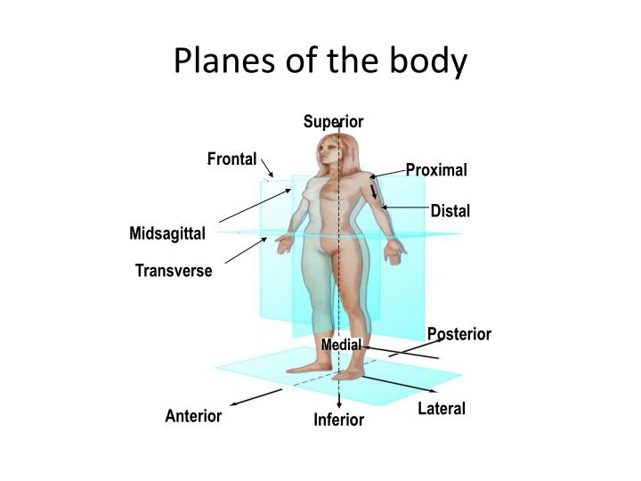 Ppt Body Planes And Directional Terms Powerpoint Presentation Id