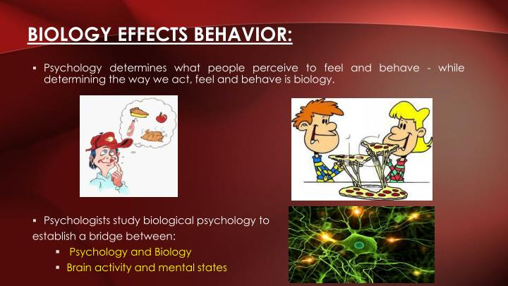 what is biological psychology Physiological psychology is another term often used synonymously with biological psychology (carlson, 2013, pg 24) biological psychology is a field that that studies the connection between the mind and body.