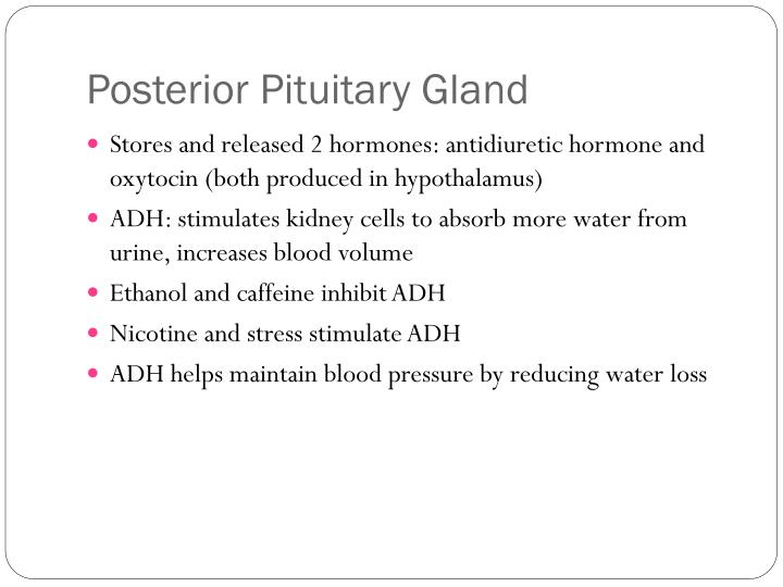 Posterior Pituitary Gland