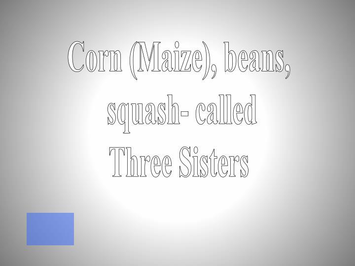 Corn (Maize),