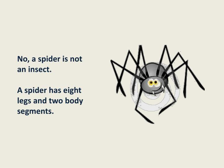 No, a spider is not an insect.