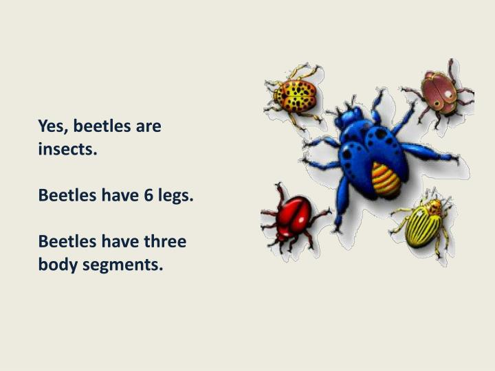 Yes, beetles are insects.
