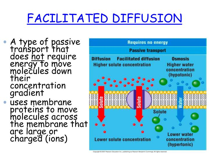 PPT - FACILITATED DIFFUSION PowerPoint Presentation - ID:2619180