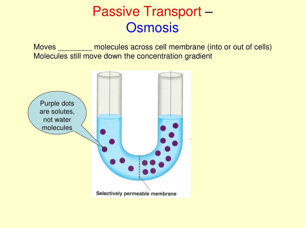PPT - Cell Transport Mechanisms PowerPoint Presentation ...  Example Of Passive Transport