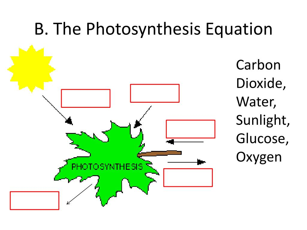 PPT - 8-2 Photosynthesis: An Overview PowerPoint ...