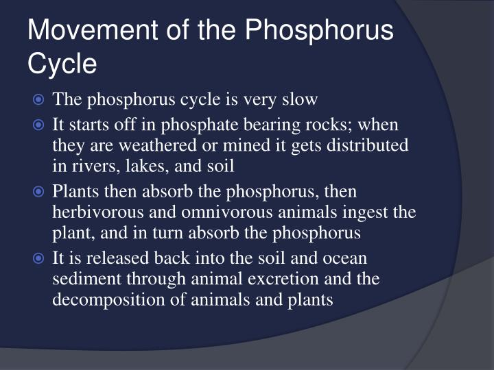 Movement of the Phosphorus Cycle