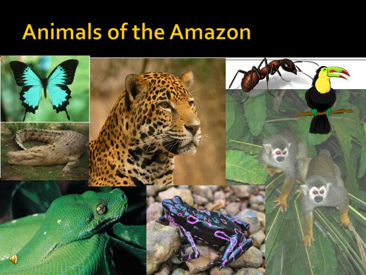 Animals of the Amazon