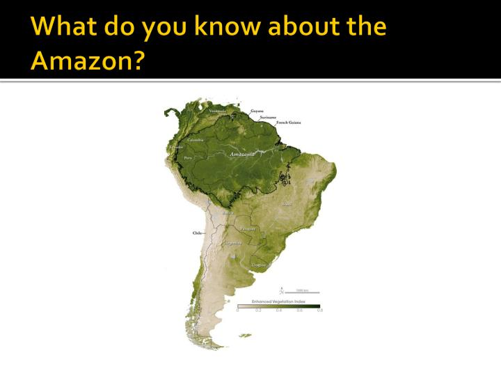 What do you know about the Amazon?