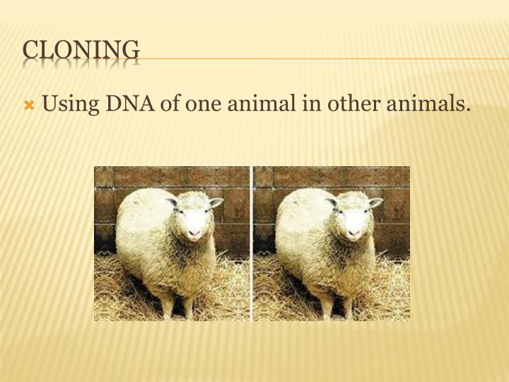 Using DNA of one animal in other animals.