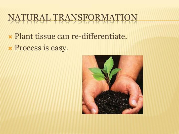 Plant tissue can re-differentiate.