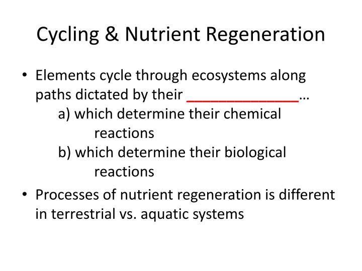 Cycling nutrient regeneration