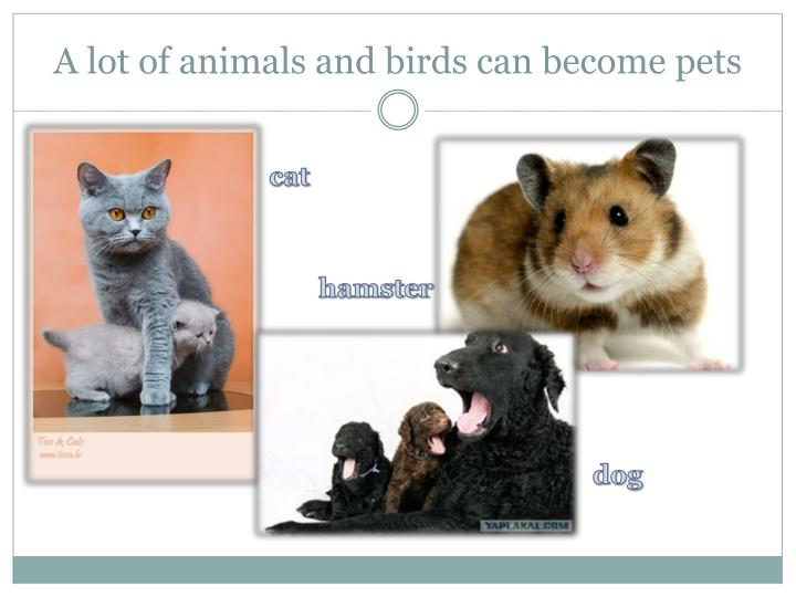 A lot of animals and birds can become pets