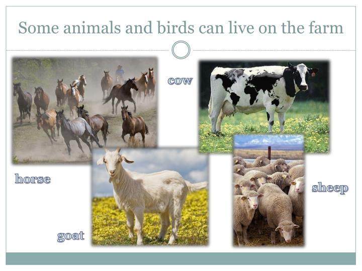 Some animals and birds can live on the farm