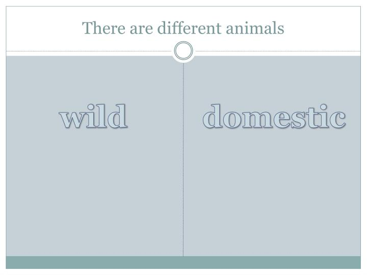 There are different animals